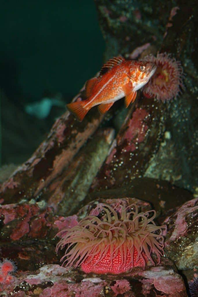 Fish and coral at Seattle Aquarium