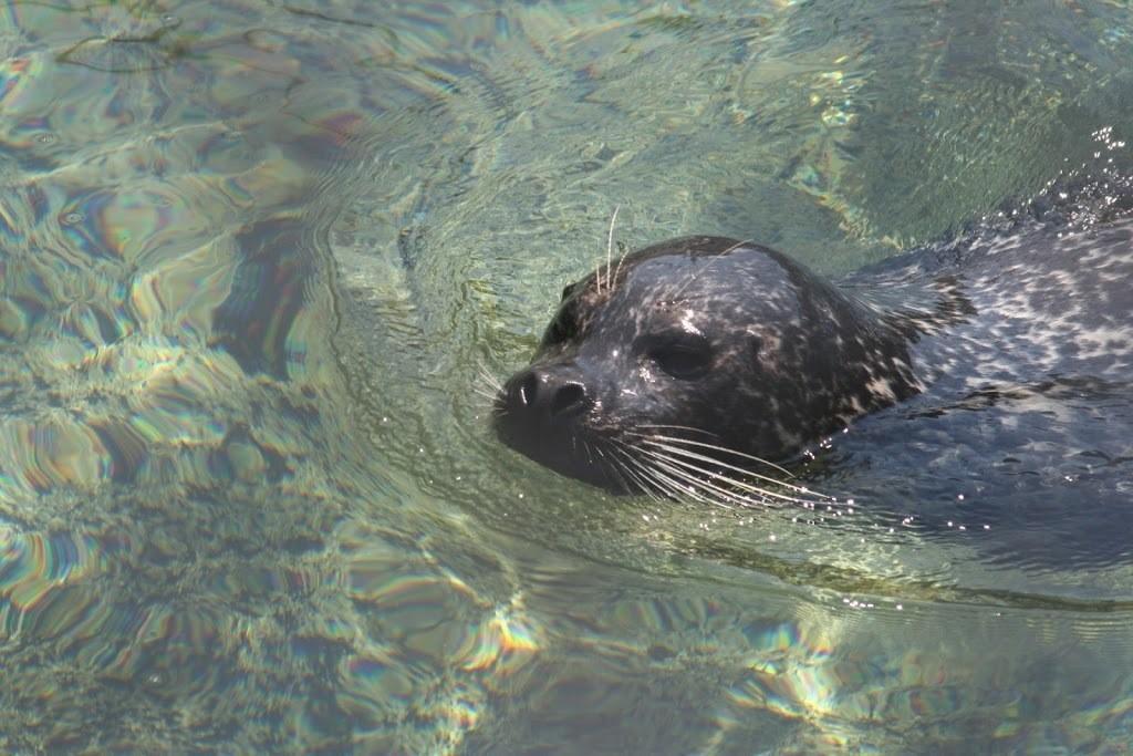 Otter at Seattle Aquarium