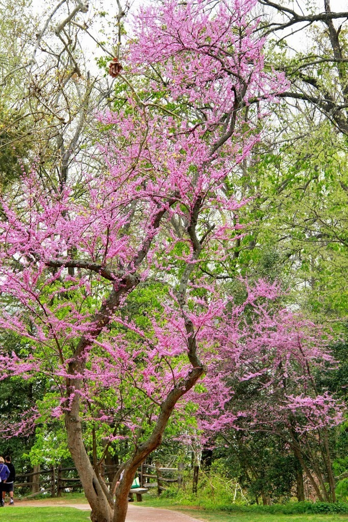 Trees in Bloom on the Forest Trail