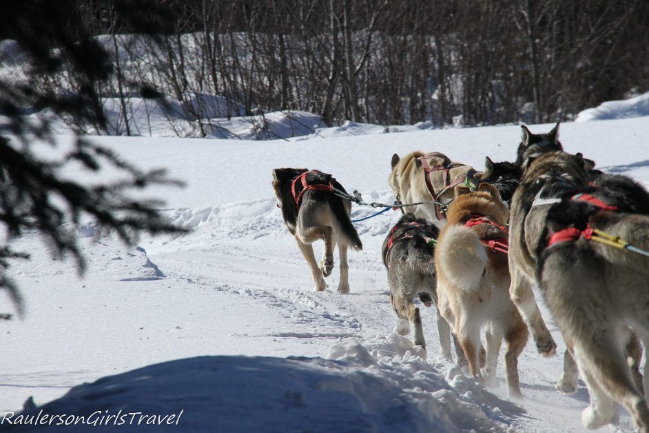 Sled dogs running around a curve