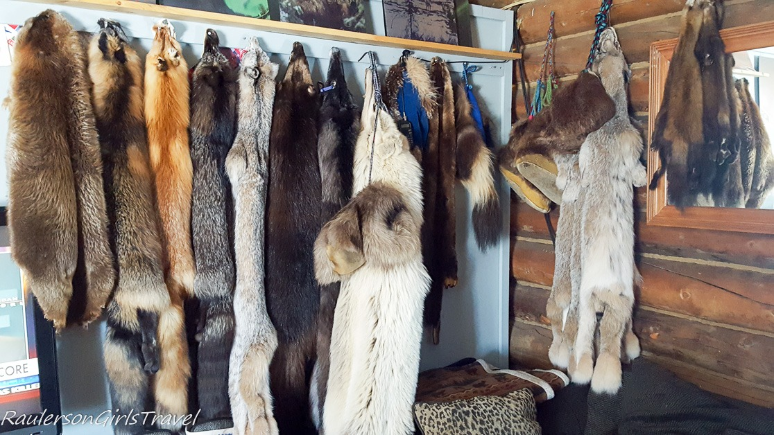Animal pelts from the Adams
