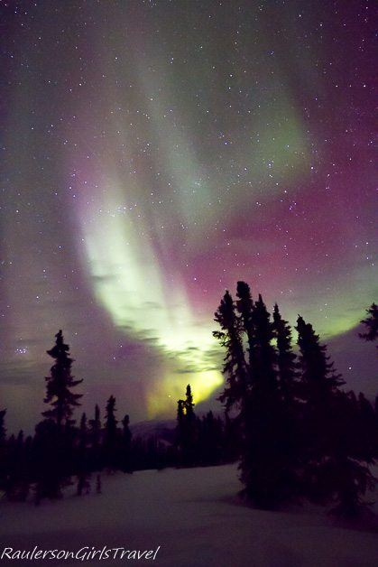 Snowy Trees foreground with Purple, Green, and Yellow Northern Lights Display