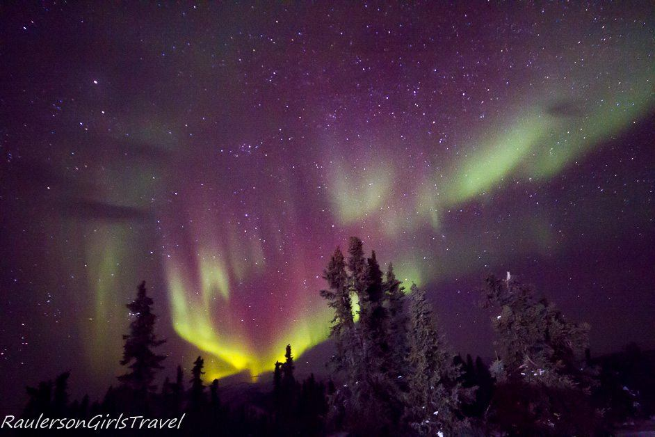 Bright yellow and purple Northern Lights display behind evergreen trees