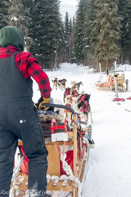 Musher with Dog Sled Team