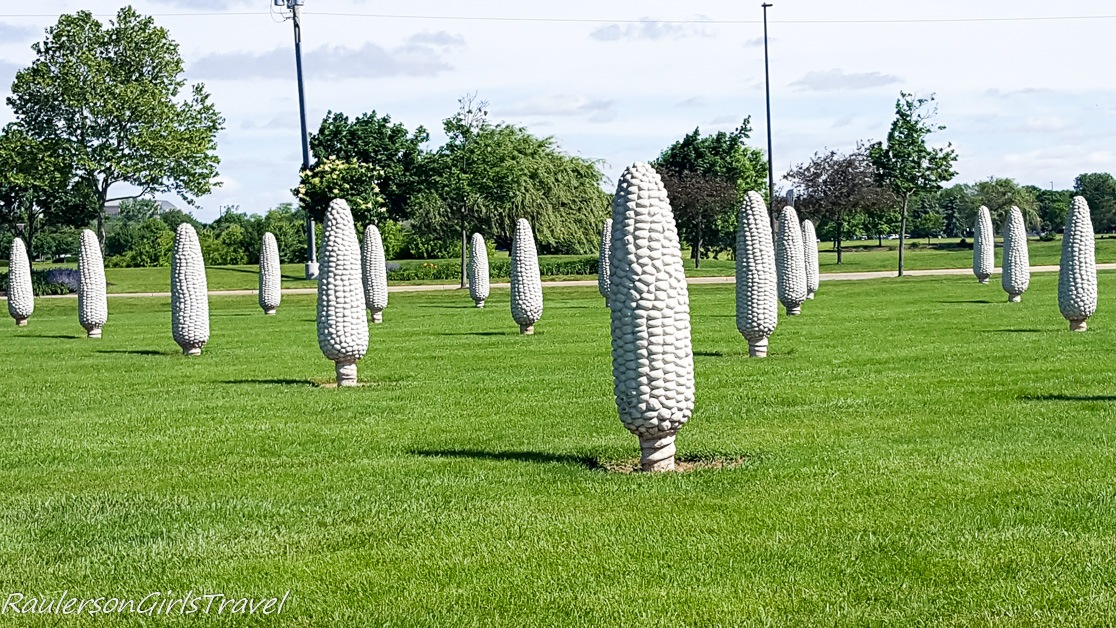 Field of Corn in Dublin Ohio