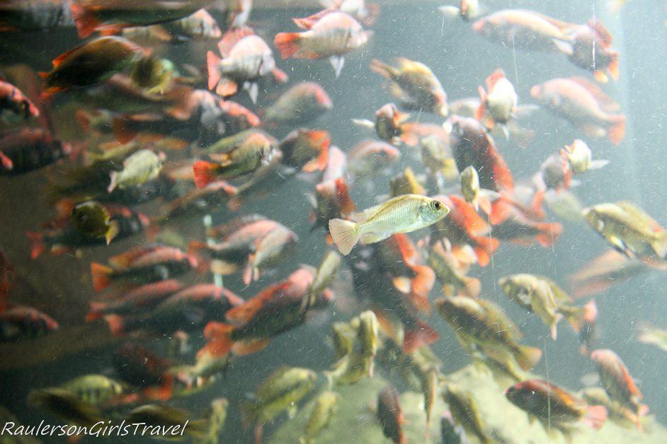 Fish at the Belle Isle Aquarium