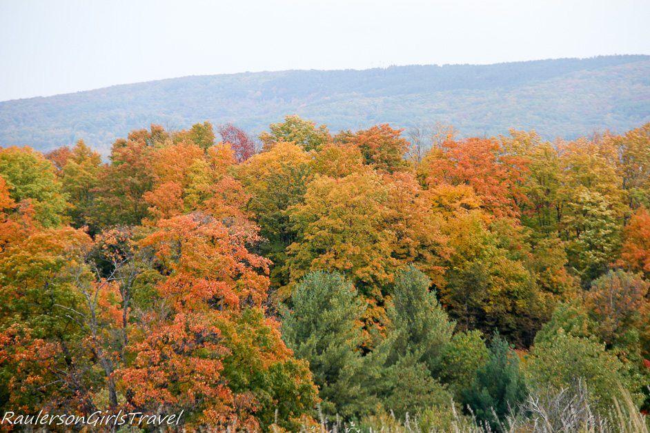 Autumn foliage in Michigan - Michigan Fall Colors