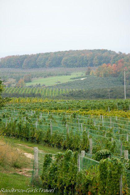 Vineyard in Traverse City