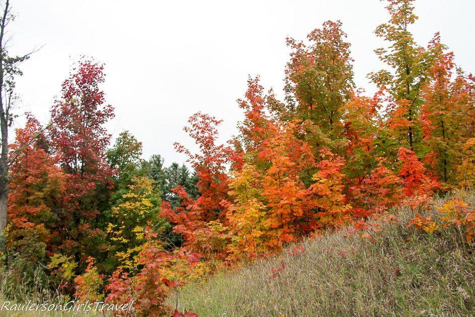 colorfal trees in fall in Michigan