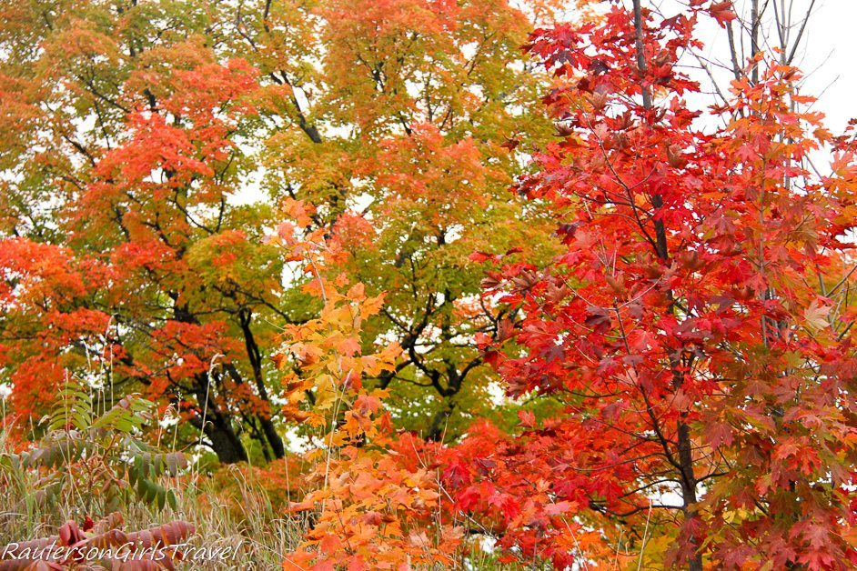 Red and orange leaves - Michigan Fall Colors