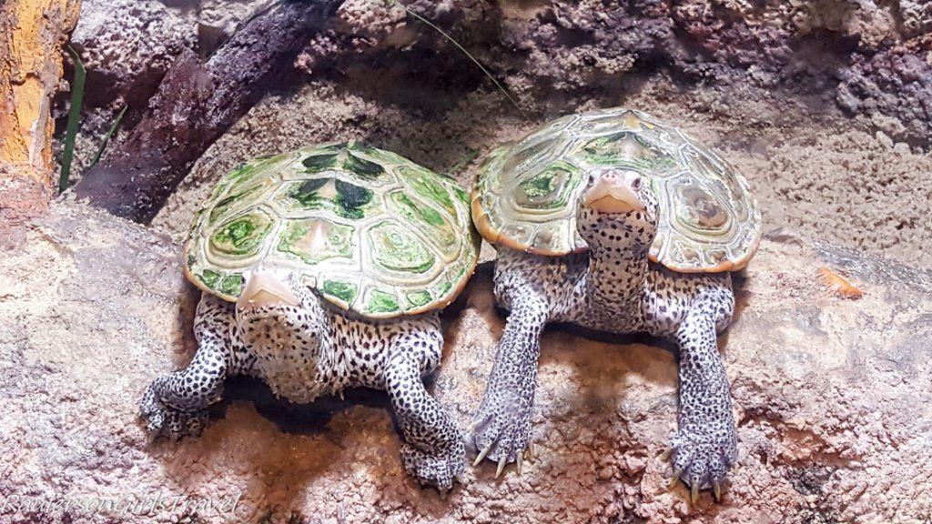 Turtles at Adventure Aquarium