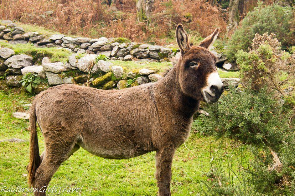 Jeanne the donkey at Molly Gallivan's Farm