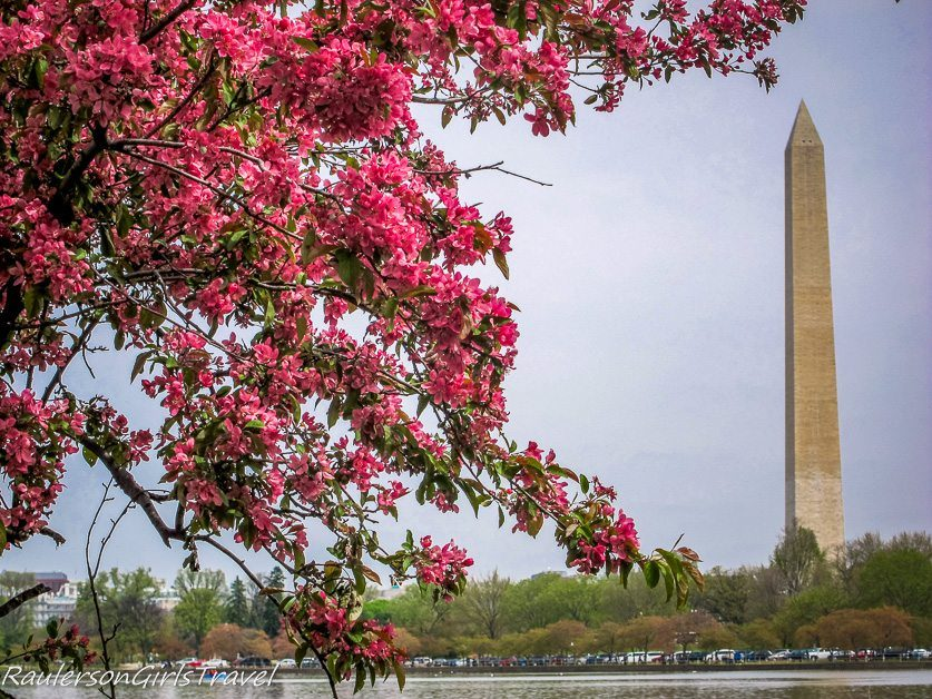 Pink Cherry Blossoms and Washington Monument at the Tidal Basin in Washington DC