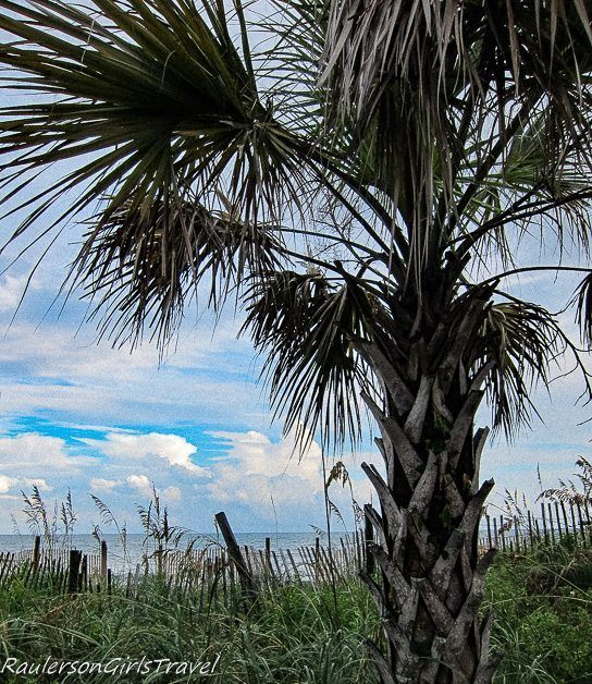 Palm Tree with Atlantic Ocean in the background