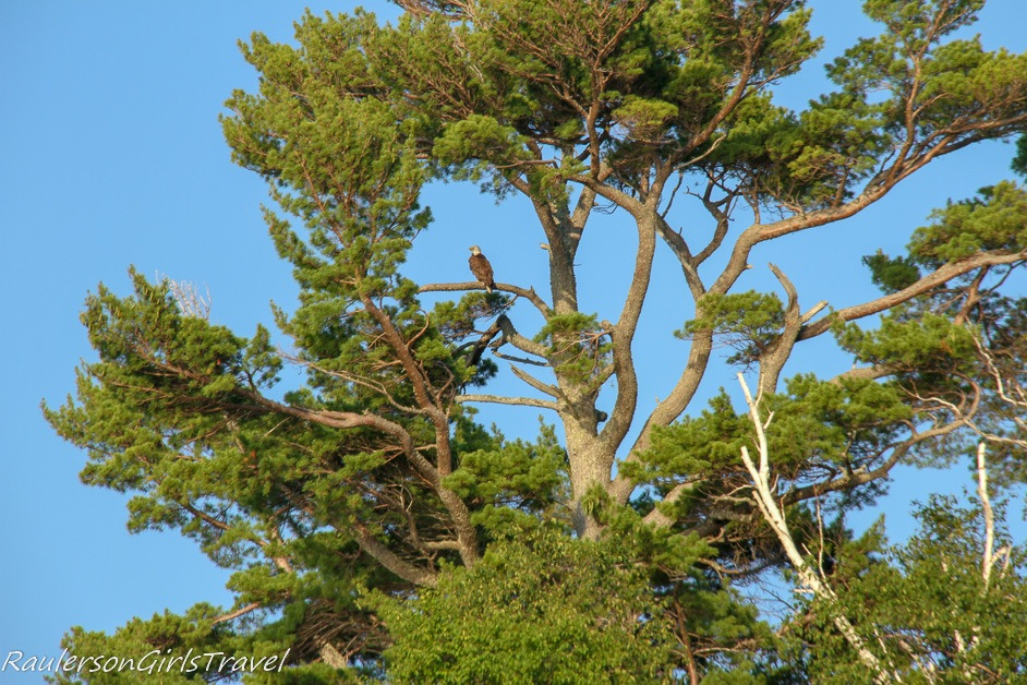 Eagles on the Pictured Rocks National Lakeshore