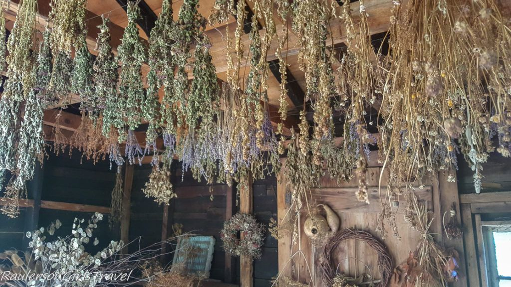 Herbs in Drying Shed