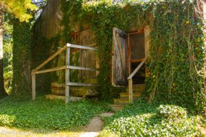 Ivy growing up side of wooden house