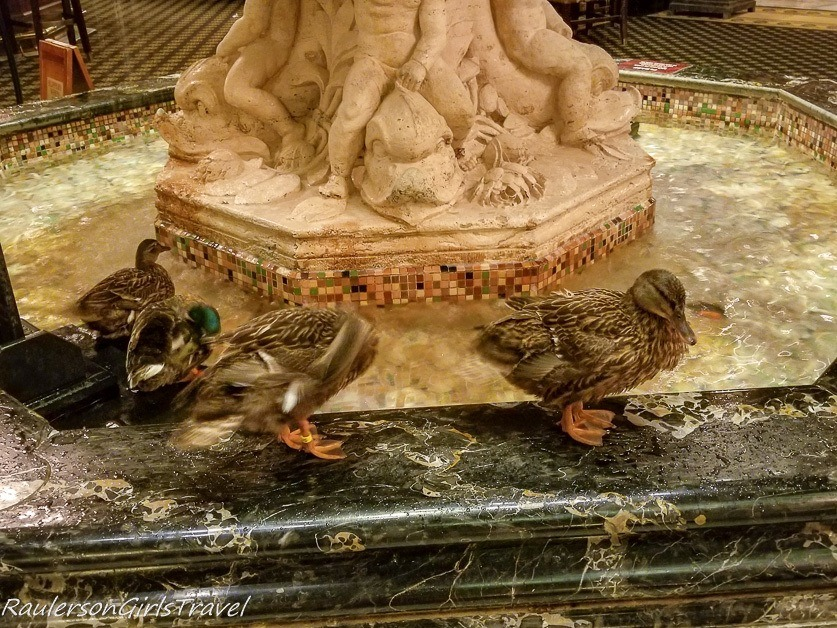 The Peabody ducks at the lobby fountain in the Peabody Hotel