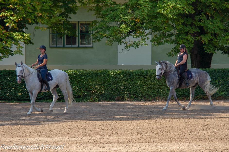 Training horses at National Stud Farm at Kladruby nab Labem