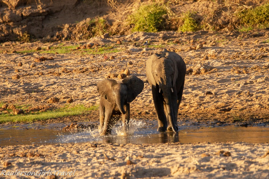 Baby elephant playing in the water with brother