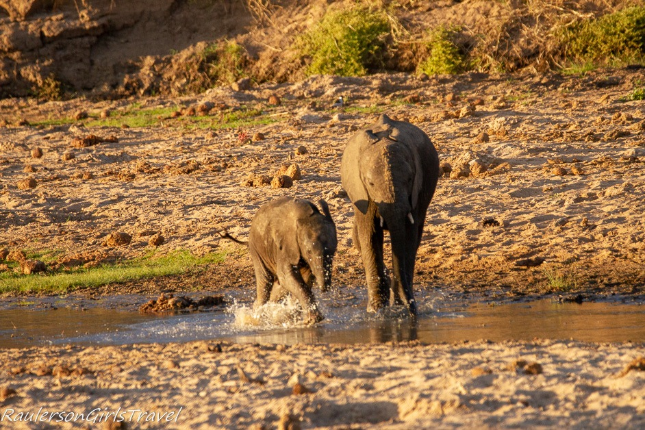 Baby elephant splashing in the water with brother