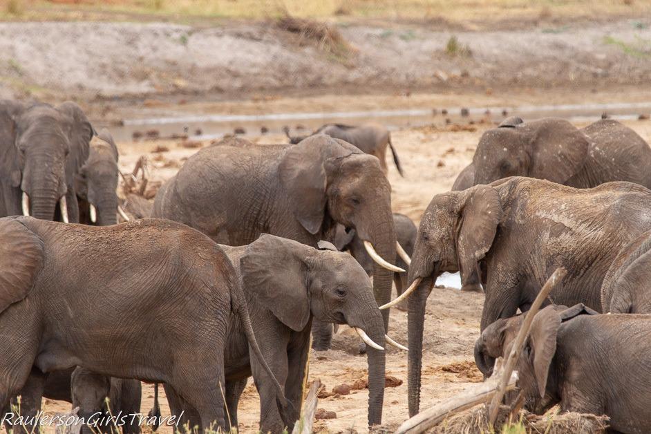 Gathering of elephants