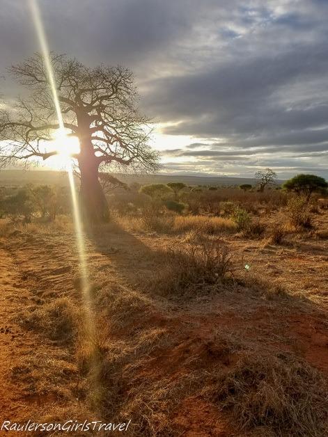 Sun shining through tree in Tarangire