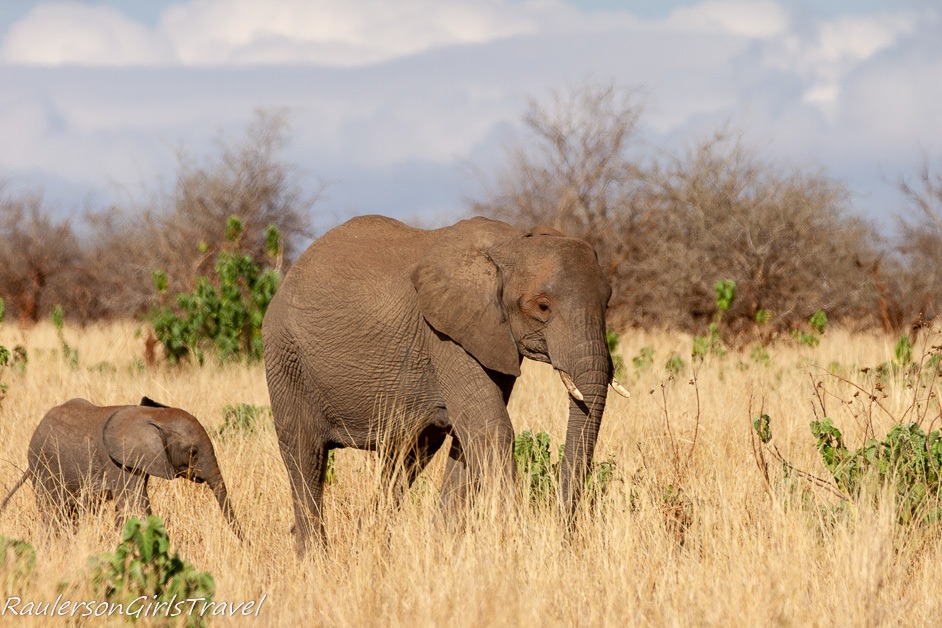 Mom and Baby elephant walking in the grass