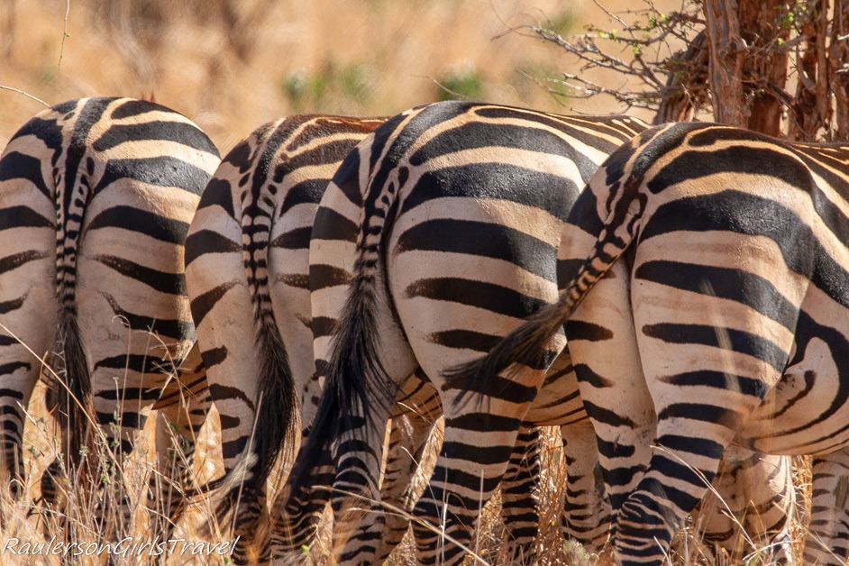 Four zebra butts