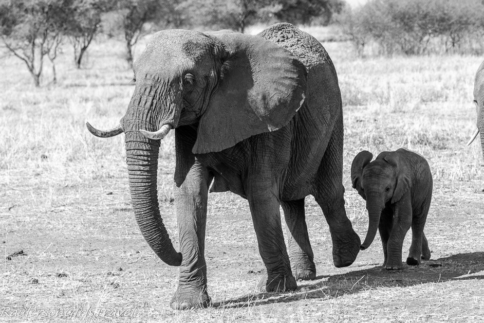 Mother and Child Elephant