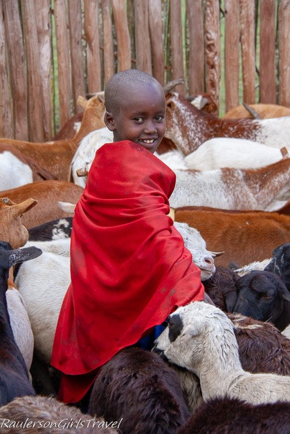 little boy with red cape among goats