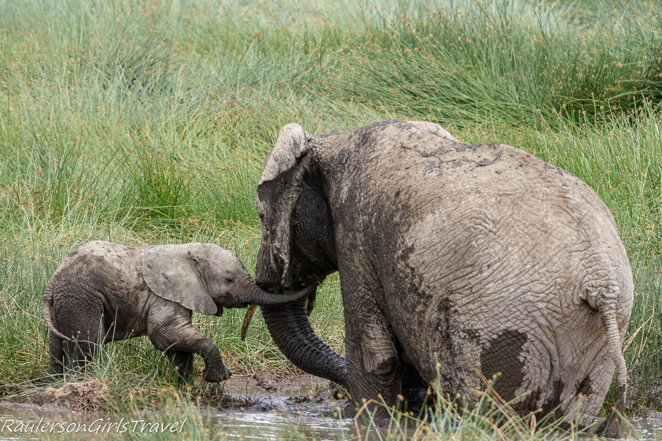 Mother Elephant helping baby elephant into the mud
