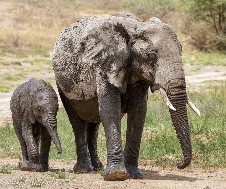 Mother and baby elephant 2
