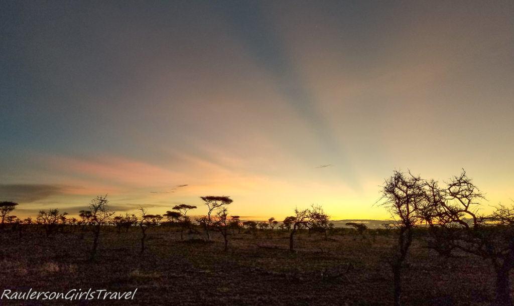 Serengeti Sunrise 14