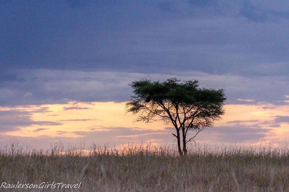 Serengeti Sunrise with lone Acacia Tree