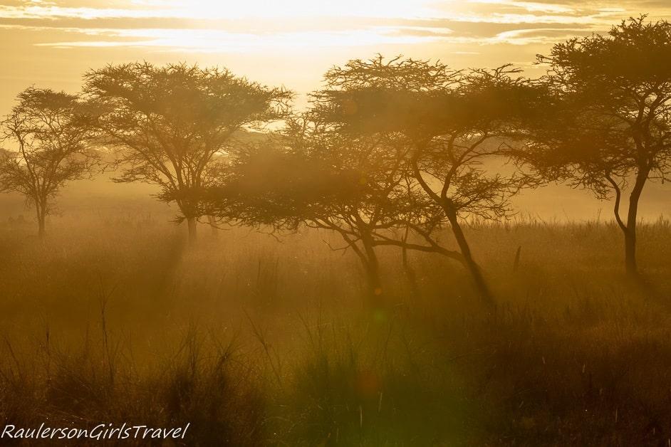 Hazy morning sun