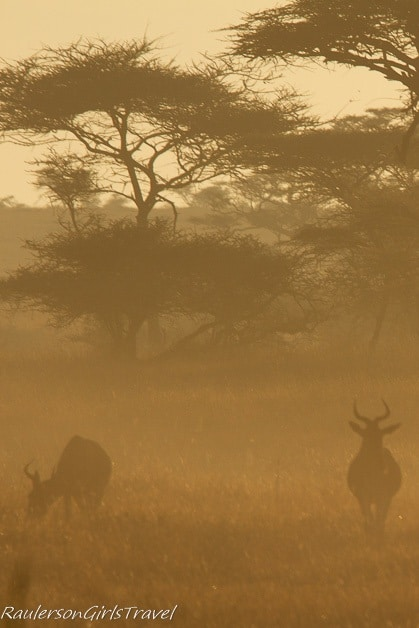 Hazy sunrise with Hartebeest silhouette