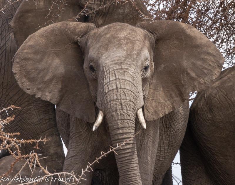 Close up of Elephant looking at camera