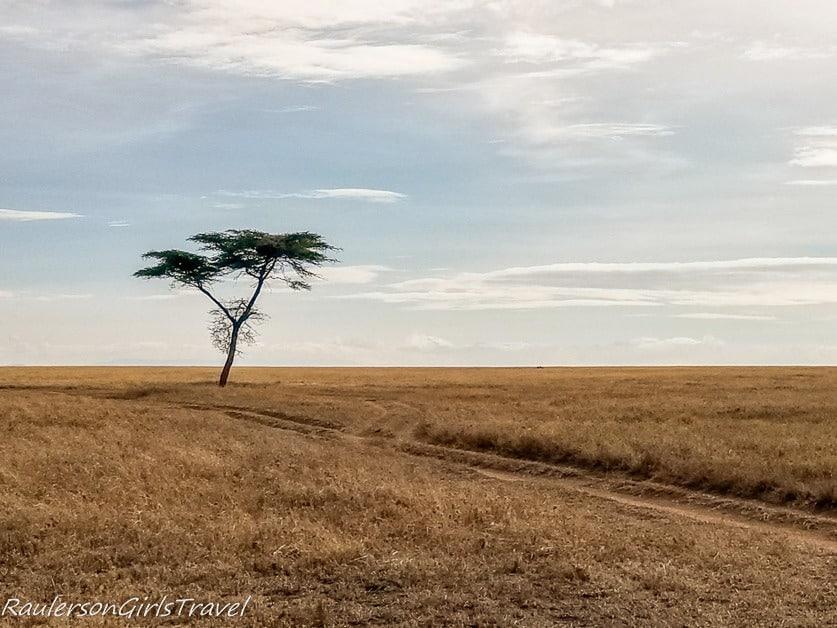 Lone Acacia Tree in the Serengeti National Park