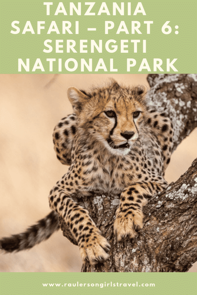 Serengeti National Park Pinterest Pin
