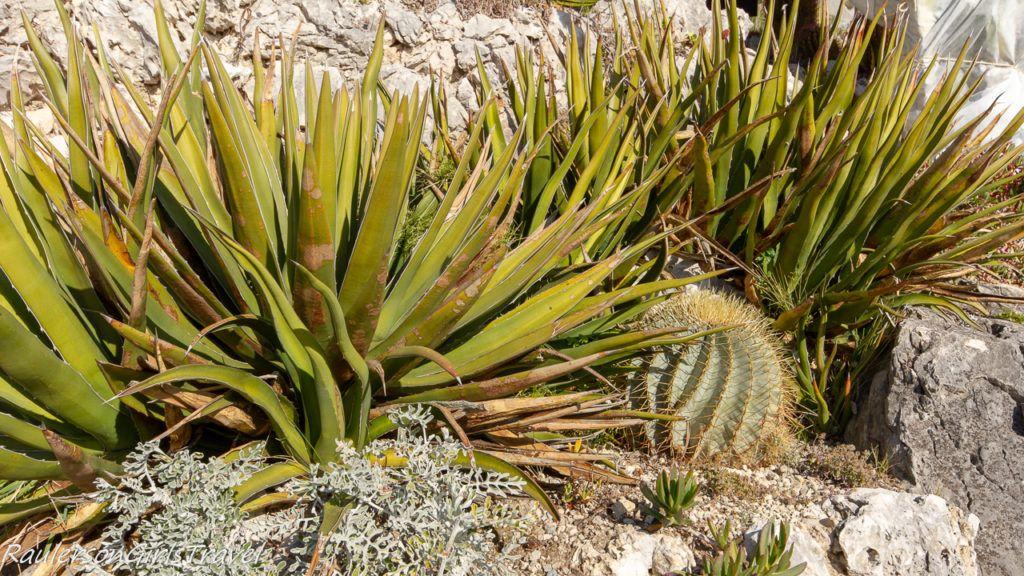 Close-up of cacti at Le Jardin d'Èze
