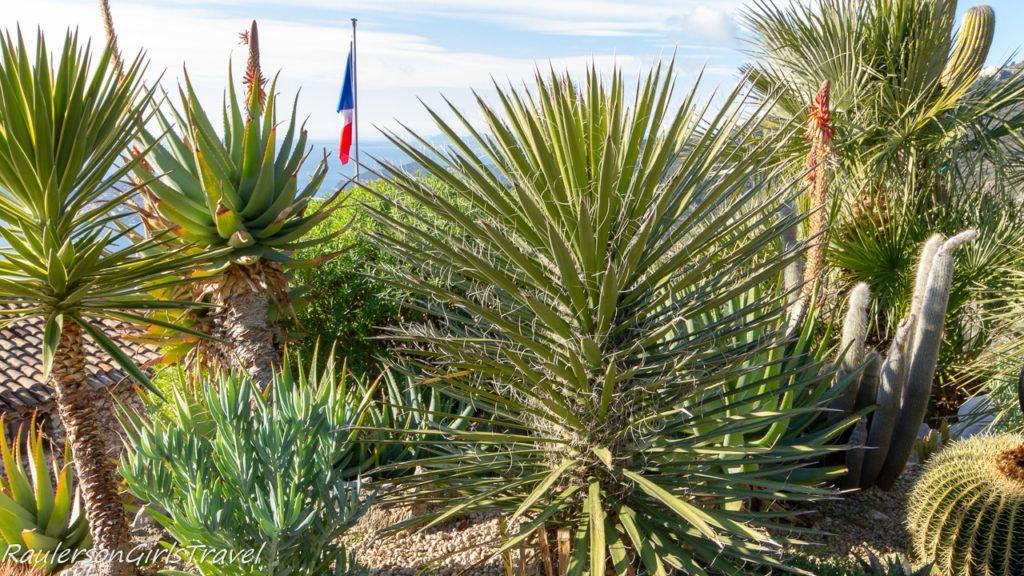 Cactus at Le Jardin d'Èze