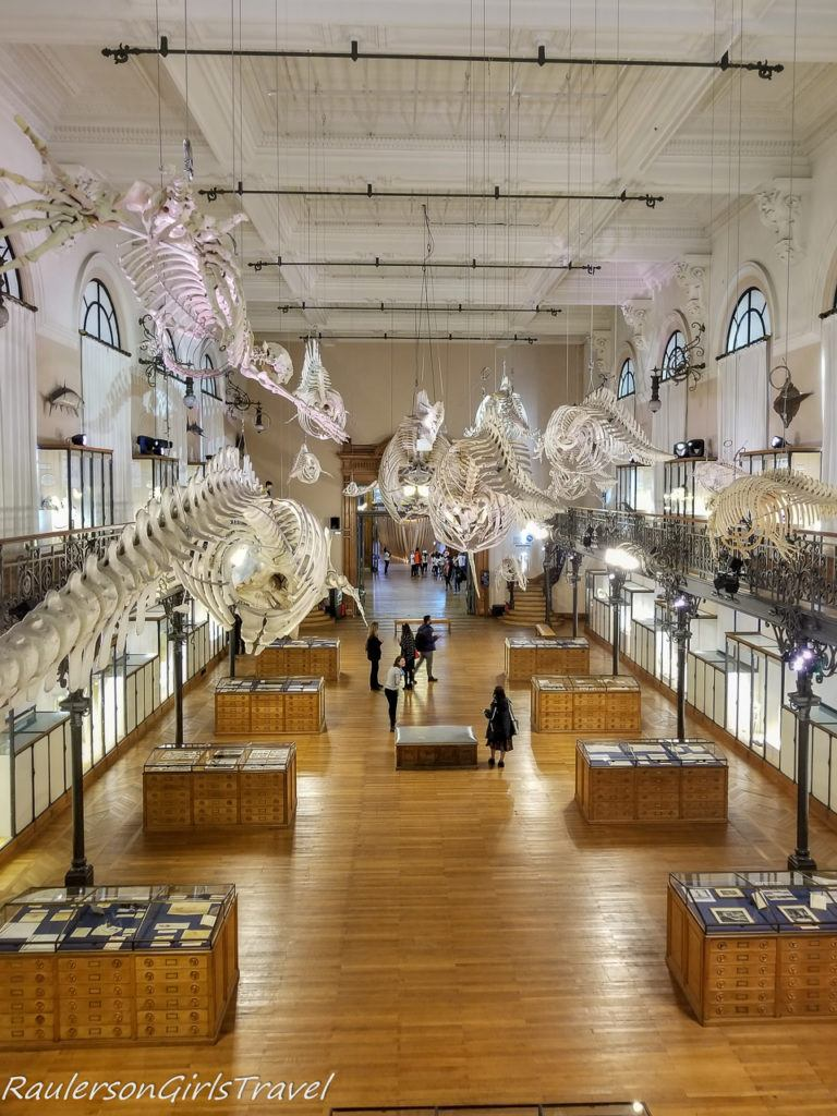 Oceanomania' exposition Whale Room 2