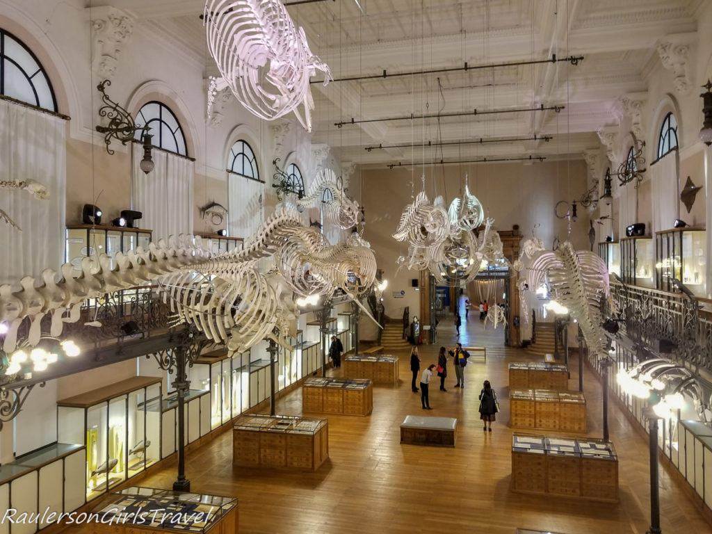 Oceanomania' exposition Whale Room 3