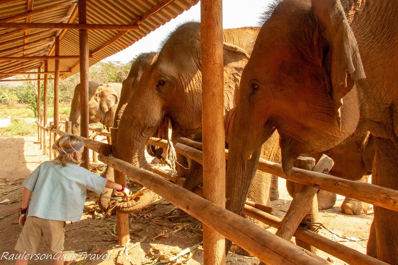 Cian feeding the elephants