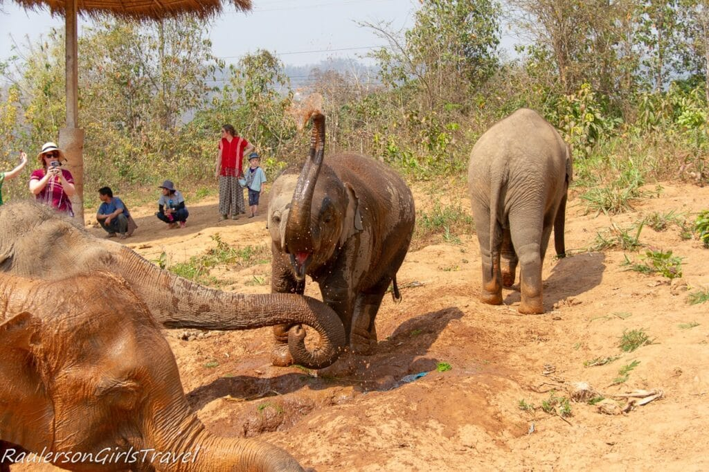 Baby elephant spraying water and mud