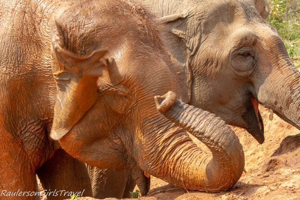Close up elephants at water hose
