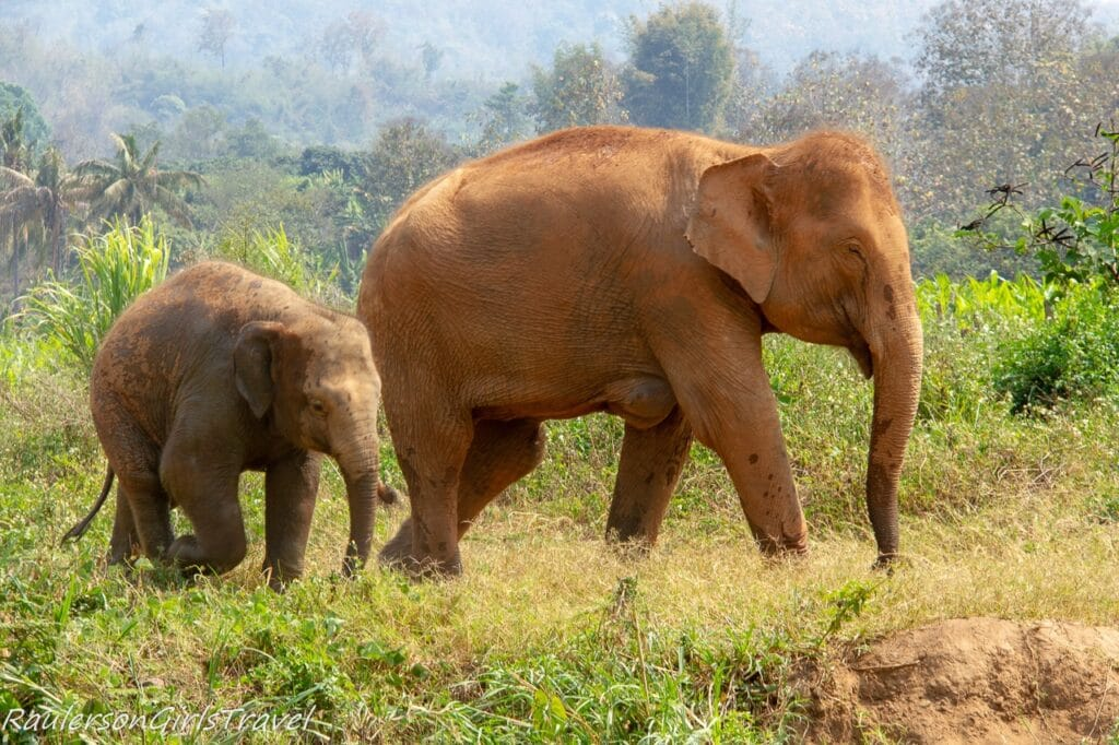 Grandma and baby elephant