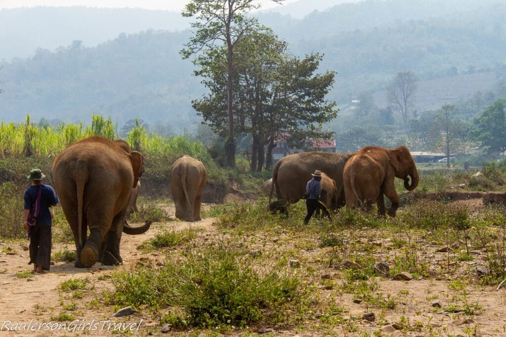 Elephants walking to the river