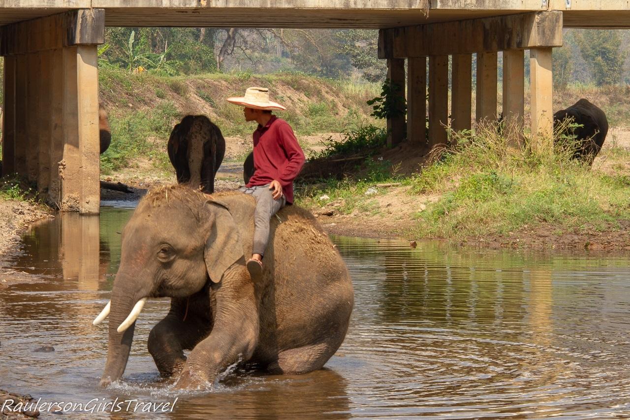 Thai man riding an elephant for tourists